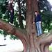 Big tree fun at the Mt. St. Michael Winery