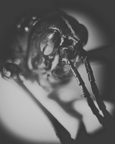 365 Day 277: Insect Portraits: Lubber by ★ 0091436 ★