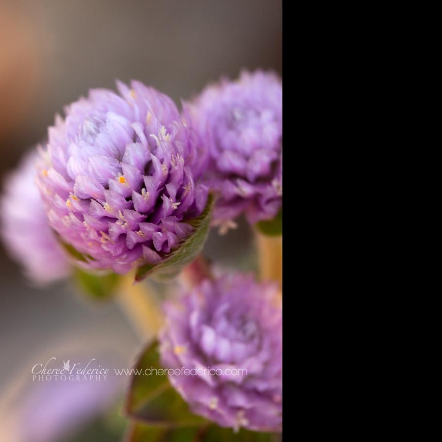 Fuzzy Purple
