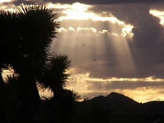 "weather n cloud rays or ""Beam me up Scottie"" (dagutzyone ) Tags: sunset weather clouds scenic joshuatree mojavedesert yuccavalley 92284"