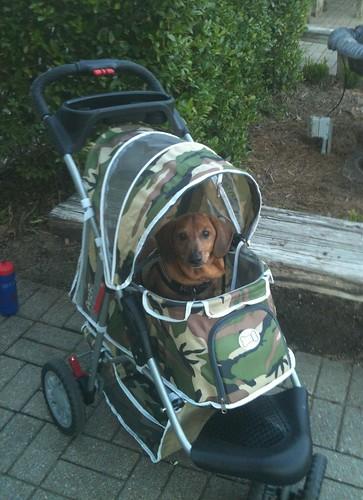 Turbo in Camo Dog Stroller