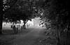 Meifod (ryan63rd) Tags: trees bw mist film church cemetery graveyard wales 35mm pentax scanned tmax400 authentic lx meifod pentaxlx smcpk50mmf12 authenticphotography epsonv600