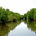 Mangroves-12