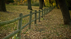 autumn fenceline (laughlinc) Tags: park autumn trees fall leaves fence vanishingpoint nebraska widescreen diagonal fallen omaha elmwoodpark 1755mmf28 nikond80 thechallengefactory laughlinc