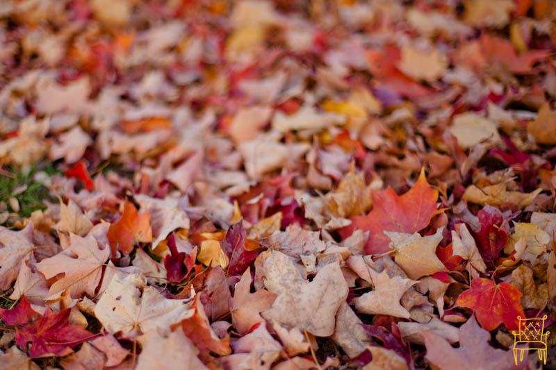 Leaves_0006
