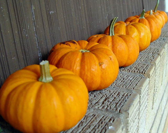little pumpkins in a row