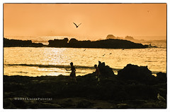 Essaouira, the sea, the seagulls (**luisa**) Tags: africa sunset morocco essaouira luisapuccini nikond7000