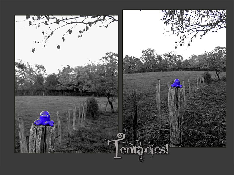 Tentacles!