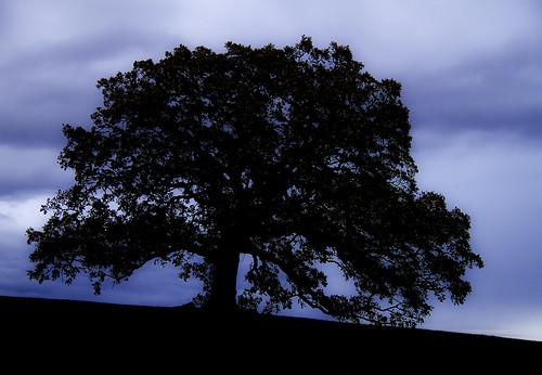 tree by McBeth