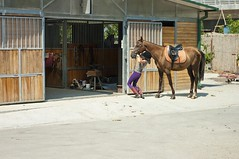 IMGP1055 (dzeferson) Tags: horse girl jockey stable saddle