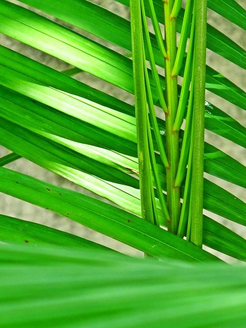 IMG_0418 11-11-11 ,  palm