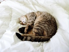 (secretheart.) Tags: light sleeping cat bed bedroom eyes coverage tigrou