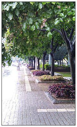 20111112樹