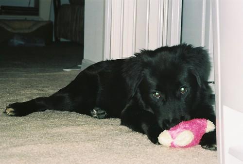 Jack at 6 months
