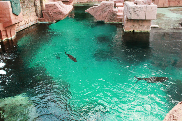 atlantis aquarium-1