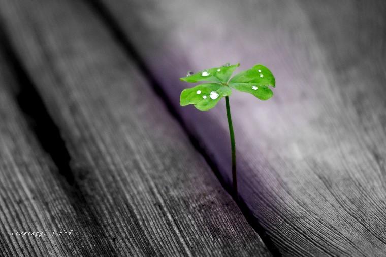 P之綠讓小草更有生命力
