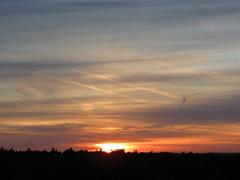 51040 Jetzt geht es wieder los, (golli43) Tags: autumn sunset streets heaven herbst himmel wolken september neighbours katzen nachbarn homesweethome spaziergnge perser nahverkehr streetlive zugvgel migratorybirds krisenjahr