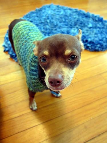 freddie,crochet 013