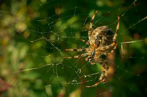 Spider =D