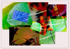 dieffenbachia collage (YAZMDG (16,000 images)) Tags: blue green art leaves leaf artistic patterns overlay screen textures layers veins feuilles feuille yaz dieffenbachia textur yazminamicheledegaye yazmdg ystudio