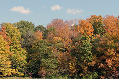 Autumn in The Morton Arboretum