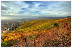 Autumn Vineyard (Habub3) Tags: travel autumn panorama holiday plant fall texture nature colors berg leaves germany landscape deutschland vineyard flora nikon colorful europa europe herbst natur pflanze grapes landschaft hdr vacanze reise wein farben weinberg d300 beutelsbach weintrauben remstal weinstadt habub3 mygearandme
