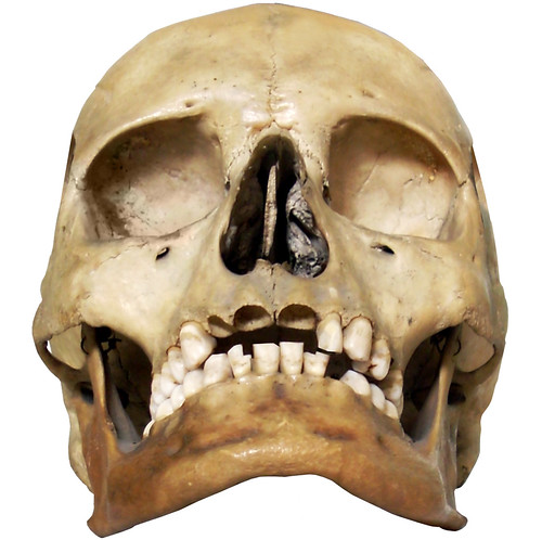 Skull  DonkeyHotey at flickr.com/people/47422005@N04/