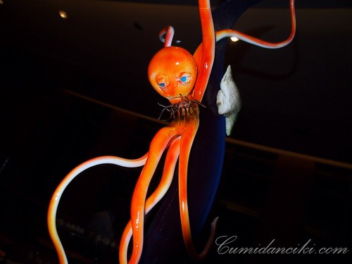Sugar Octopus