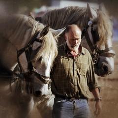 Robert Sampson (strussler) Tags: england horse canon eos westsussex heavy ploughman percheron rogate 2xextender ef100400l robertsampson 5dmkii schha dontforgetneda snapseed allenglandhorseploughingchampionships