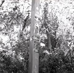 (Josh Sinn) Tags: trees blackandwhite bw 120 6x6 film mediumformat md kodak tmax stickers maryland foliage 400 bushes lightpole howardcounty ellicottcity yashicamat124g billsmusic joshsinn joshuasinn