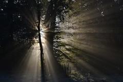 _DSC3644 Ein wunderschöner Herbstmorgen beginnt... - A magnificent autumn morning begins ... (baerli08ww) Tags: germany deutschland nikon rheinlandpfalz westerwald abigfave world100f mygearandmebronze mygearandmesilver mygearandmegold photographyforrecreationeliteclub photographyforrecreationclassic