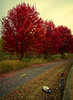 """Fall Colors <a style=""""margin-left:10px; font-size:0.8em;"""" href=""""http://www.flickr.com/photos/8402379@N06/6293635278/"""" target=""""_blank"""">@flickr</a>"""