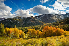 Light Dances on the Peaks of Sonora Pass (Darvin Atkeson) Tags: blue autumn orange mountain snow mountains color green fall yellow pine sonora forest gold afternoon fallcolor sierra snowcapped peaks aspen sierranevada highsierra darvin sonorapass atkeson darv liquidmoonlightcom