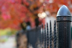 Fence on Fire (J and J and M and M) Tags: red fall fence fire bokeh canon50mm14 canonrebelt2i
