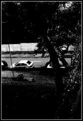 Manoel Borba Gato (Paulo JS Ferraz) Tags: trees film filme kyocera rvores doublex banhado 5222 17min kodakdoublex yashicamf3 kodak5222 pauloferraz pjsf paulojsferraz caffenol814sal