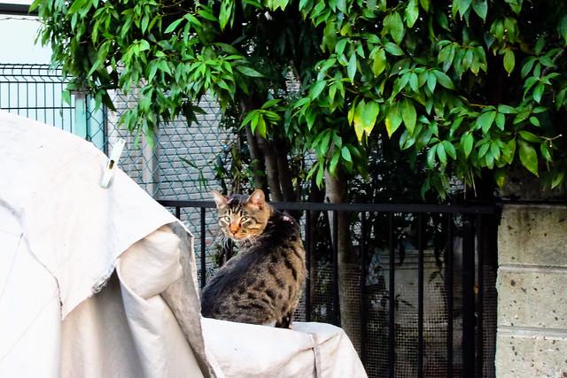 Today's Cat@2011-11-04