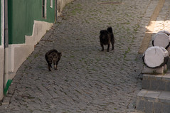 _SGS0760.jpg (uh whatever) Tags: pets portugal cityscape odeceixe