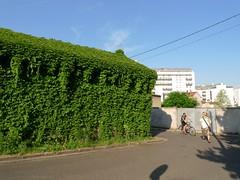 . (Marie Nolle Taine) Tags: street city light shadow urban house france town europe lyon covered virginiacreeper villeurbanne