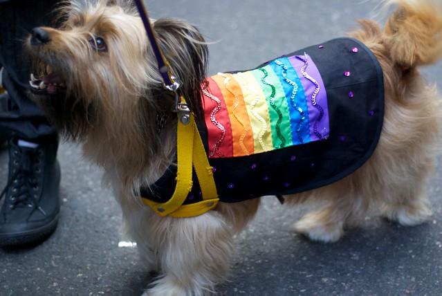 Rainbow pride doggy