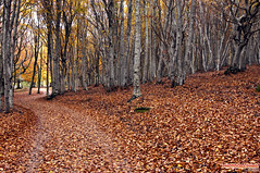 Autunno (Andrea Morico) Tags: landscape nikon wideangle tokina1224 tokina paesaggio 1224 d90