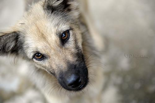 doggy800