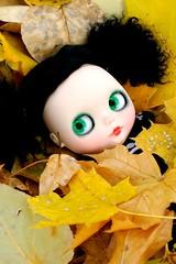 Leaf Blanket 196/365 BL♥VED