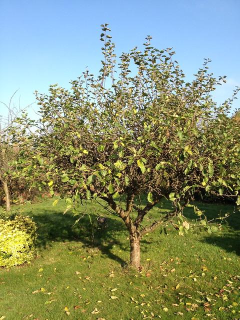 apple tree iphone4s