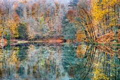 Yedigller, Turkey (Nejdet Duzen) Tags: trip travel autumn lake reflection tree nature turkey trkiye bolu aa gl yansma turkei sonbahar seyahat doa yedigller saariysqualitypictures mygearandme ringexcellence
