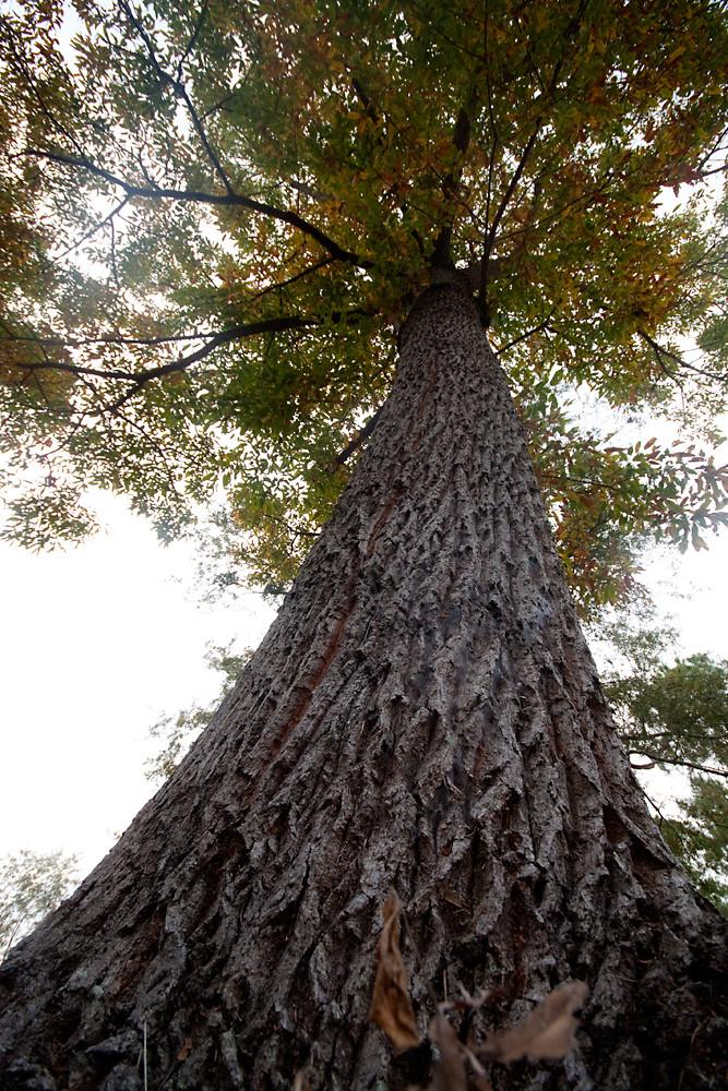 Low 14/30: Oak