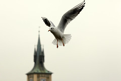Praha okt -11 (bjarne.stokke) Tags: nov seagull praha 135mm mke 2011 karlsbroa tjekkia ef135mmf2lusm canon5dmarkii doubleniceshot tripleniceshot mygearandmepremium mygearandmesilver mygearandmegold mygearandmeplatinum aboveandbeyondlevel1 aboveandbeyondlevel2 rememberthatmomentlevel1 rememberthatmomentlevel2 rememberthatmomentlevel3 vigilantphotographersunite vpu2 vpu3 vpu4 vpu5 vpu6 vpu7 vpu8 vpu9 vpu10
