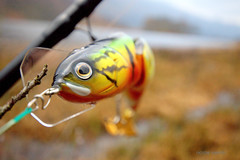 Dead or Alive lure. (Nicolas Valentin) Tags: uk dead fishing alive lomond deadoralive daiwa kayakfishing kayakscotland