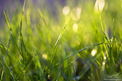 Green grass (Oscar.vng) Tags: light sunset naturaleza luz nature grass canon atardecer bokeh hierva tamron90mm28 60d oscarvng ancoradesign