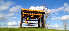 I wanted to go all Angry Birds on this pumpkin display. (missjenn) Tags: thanksgiving angrybirds