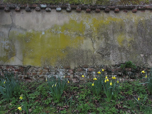 Daffodils and wall